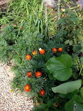 Greenhouse bounty