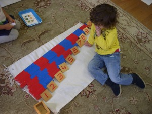 having completed work with the number rods, this child surveys his work before putting away the materials