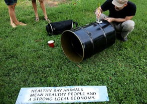 Healthy Bay Animals Mean Healthy People and a Strong Local Economy. Photo credit: Brian Schneider, www.ebrianschneider.com