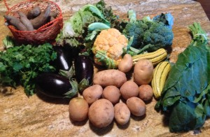 Cilantro, sweet potatoes, red leaf lettuce, golden cauliflower, broccoli, delicata, collards, potatoes, and eggplants.