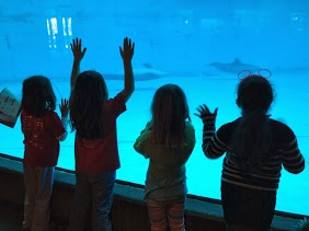 If only we could get in there and swim around with them . . . sigh. We love dolphins . . .