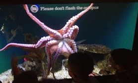 Please don't flash the octopus!
