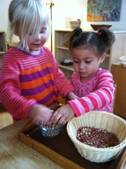 Primary students work with Montessori sensorial materials to refine their senses.