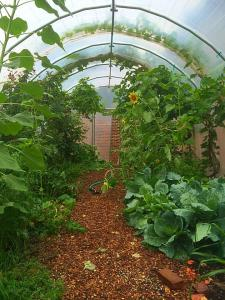 The greenhouse is a magical place for TNCS students, full of wonder and possibility.